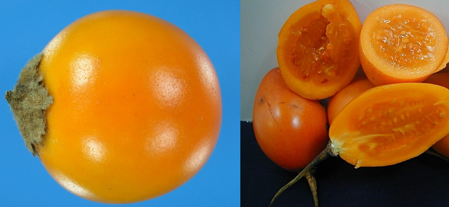 Lulo and tree tomato fruits. Photo: A.M. Torres-González