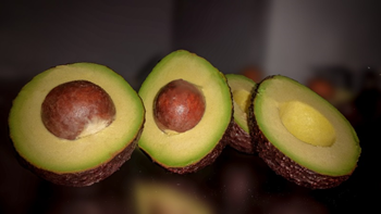 The main challenge of the avocado chain in Colombia is to produce quality. Photo: J.C. Henao-Rojas