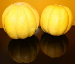 Creole melon fruit. Photo: F. Espinosa