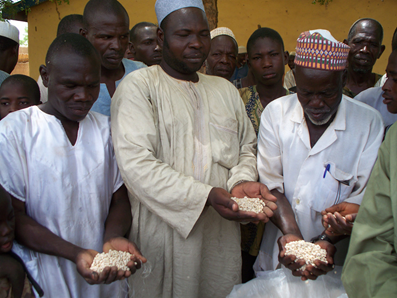 Farmers examine cowpea seeds stored in PICS bags. Photo: IITA and PRO (CC BY-NC-SA 2.0)