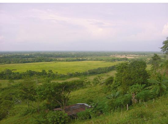 Agroecosistema en el trópico bajo colombiano. Foto: J.A. Cleves-Leguízamo